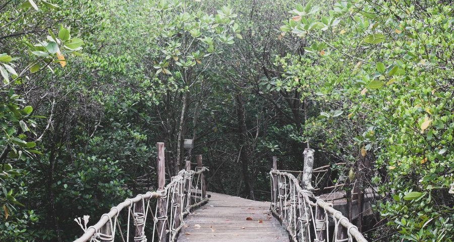 Wooden walk bridge decorated with white rope leading eyes into the green healthy mangrove forest in rainy day but bright sky, beauty nature